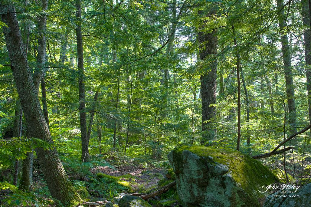 Woods of Winnipesauke