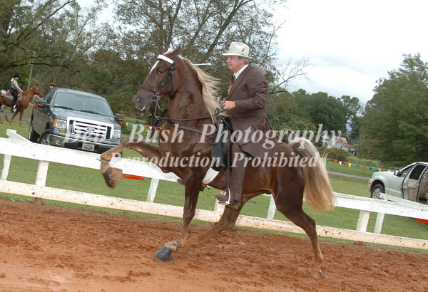 CLASS 4  OPEN 2 YR OLDS