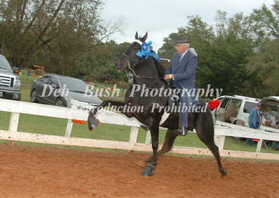 CLASS 9  OPEN 3 YR OLDS