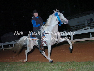 CLASS 31  SPOTTED SADDLE HORSE OPEN SPECIALTY