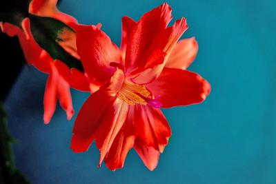 GF 2014.05 Flowers