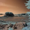 01 Color Infrared