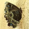 Butterfly on a Field of Fleece
