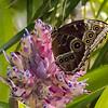 Nectar Break