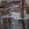 Winter at Huntley Meadows