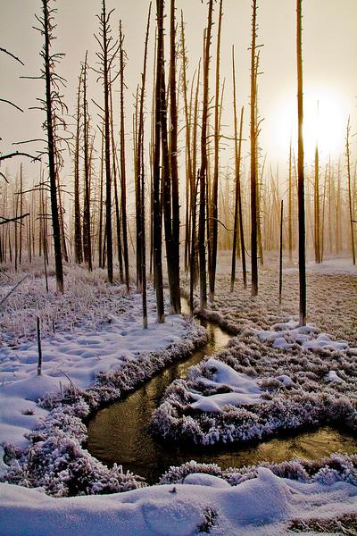 Tangle Creek Morning