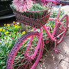 Hot Pink Wheels- MarionE 06