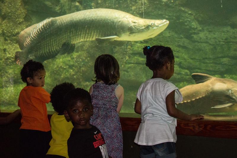 National Zoo - BradshawG - IMG_4301
