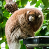 National Zoo - BradshawG - IMG_4308