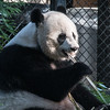 National Zoo - BradshawG - IMG_4187