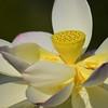 White  blossom - OsterM - 2 jpg