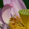 Pink blossom - OsterM - 1 jpg