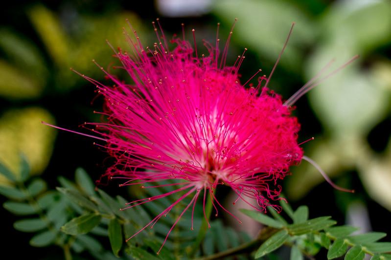 Green Spring Gardens - BradshawG - IMG_4108