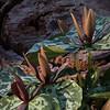 Meadowlark - BradshawG - IMG_7230
