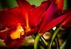 US Botanical Gdns - MarionE -5