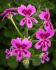 US Botanical Gdns - MarionE -8