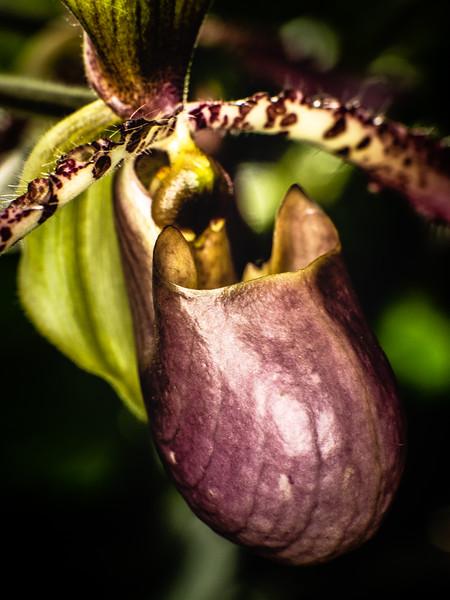 US Botanical Gdns - MarionE -3