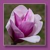 Cherry Blossom - MarionE - 3