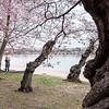 cherryblossums-kelbergr-01 jpg-6