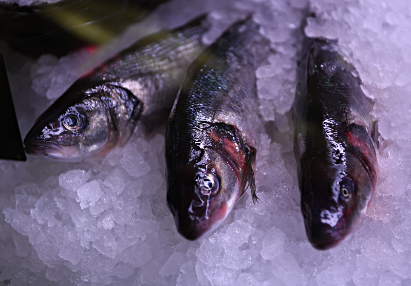 Fish on Ice - OPC Field Trip to Union Market