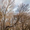 20210927 - BradshawG - Meadowlark Winter - IMG_4752-dnai