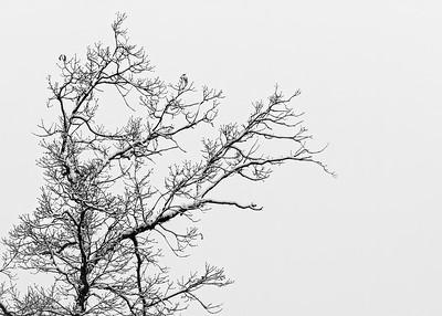 20210614 - Winterscapes - Bradshawg - IMG_8825-Edit-Edit-2