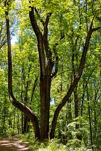 20210614 - National Park Cull - BradshawG - IMG_9406