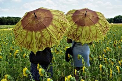 20210614 - LubinskiR-Sunbrellas-