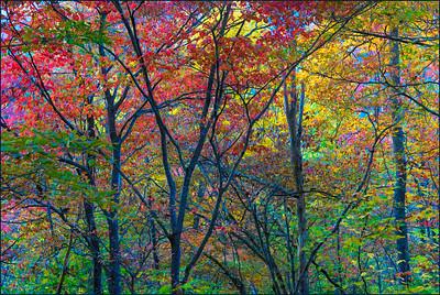 20210614 - OlsenJ - Fall Colors