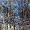 BradshawG - Gardens in Winter - Ashby Pond - IMG_4950