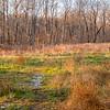 Winter Meadow - Royal Lake