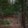 Bridge Revealed - Meadowlark Woods