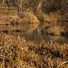 BradshawG - Gardens in Winter - Ashby Pond - IMG_4926