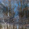 BradshawG - Gardens in Winter - Ashby Pond - IMG_4950-2