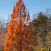 Burke Lake Golf Tree