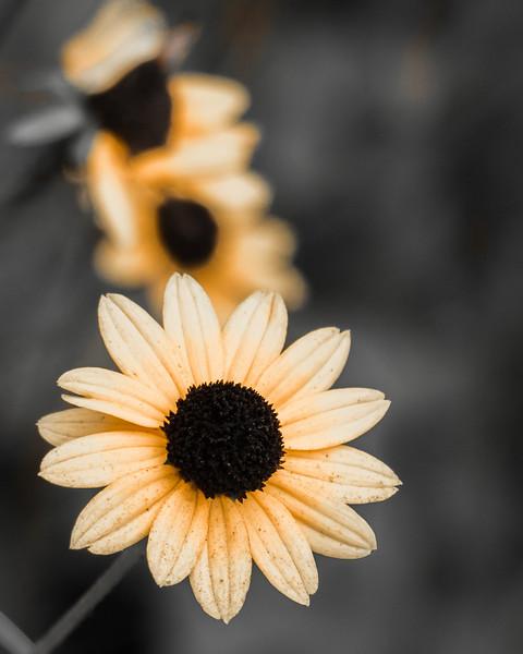 Last Flowers at Walker Nature Center
