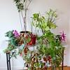 Plant Legacy - GundryD