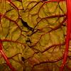 ClellandR-Refrig-Photo2