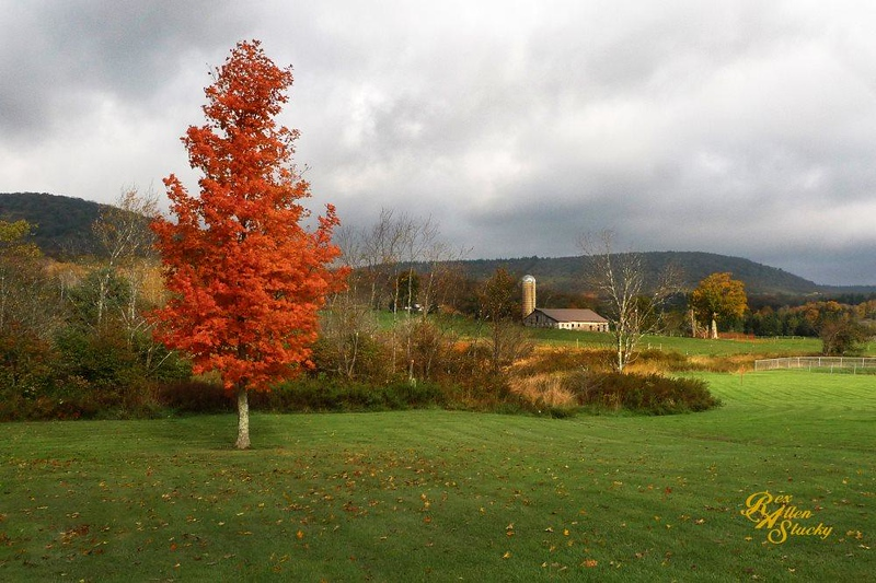 Red Tree in Canaan Valley - Rex Stuckey