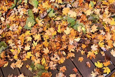 Fallen Leaves 4830