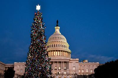 Capitol+Christmas Tree