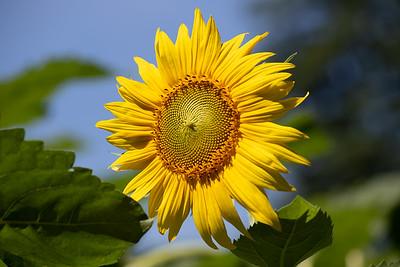Basking in the Sun - ClineLFH - 1Q9A7456