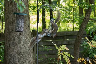 Drama at the feeder