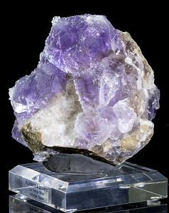 PurpleDruzy
