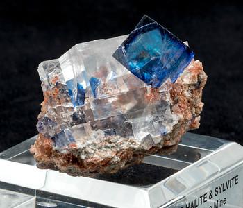 BlueHaliteSylv1