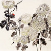Chrysanthemum Garden, 13.5 x 23 inches, Chinese ink and watercolor on hanshi, dry mounted.