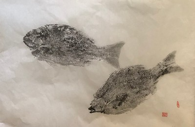 "Gyotaku fish print, 24"" x 36"", sumi on washi"