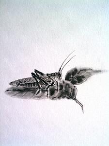 Detail of grasshopper shikishi.