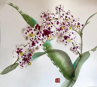Orchid Series: Speckled Phalaenopsis