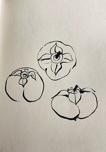 ink sketch: persimmons